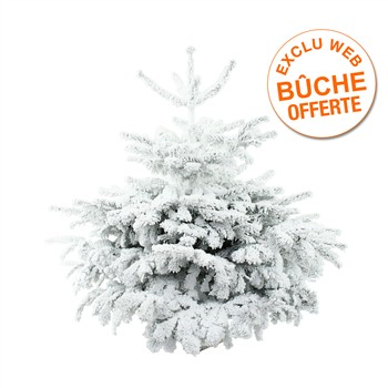 Sapin Abies nordmann floqué blanc ignifugé: H 90/100 cm